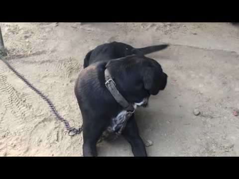 cute and funny doggy sheru playing video compilation
