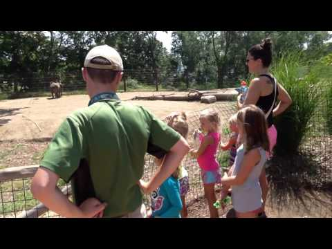 African Elephant Keeper Chat at Omaha's Henry Doorly Zoo & Aquarium video 4