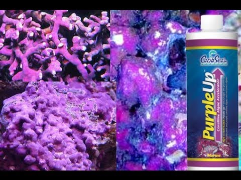 How to Grow Coralline Algae- Accelerate Purple Algae Growth!