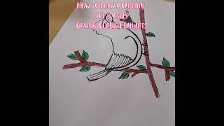 how to draw carḋinal cartoon arts for kids #ofwlibicordilleranArts