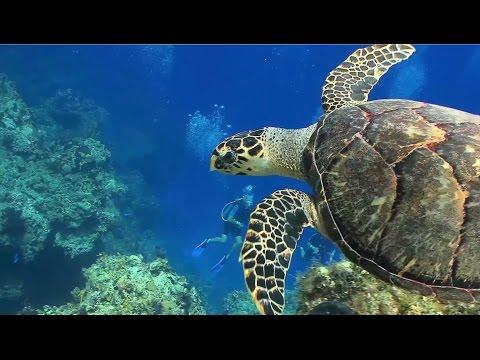 Sea Turtles Fun Facts Amazing Video