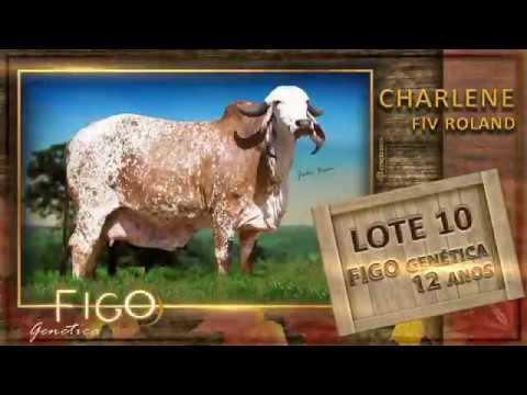 LOTE 10 - CHARLENE FIV ROLAND - JRRG 249
