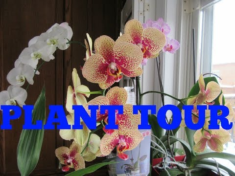 PLANT TOUR 2018