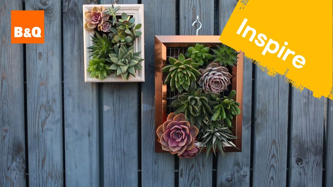 Make a living succulent picture youtube make a living succulent picture jeuxipadfo Image collections