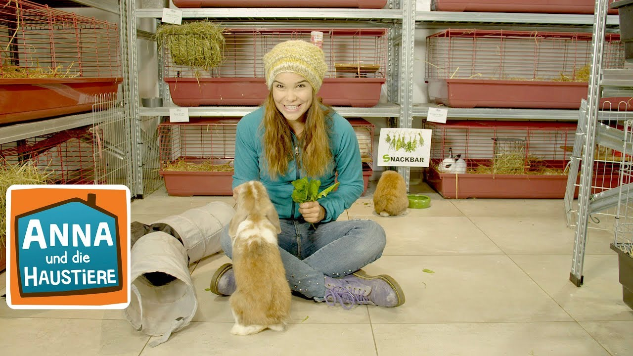 Ein Tag Im Tierhotel Information Fur Kinder Anna Und Die Haustiere Spezial Youtube