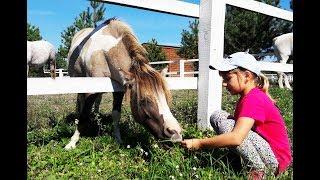 Едем на ранчо, Первый Урок Верховой Езды, видео с лошадьми для детей, влог лошади
