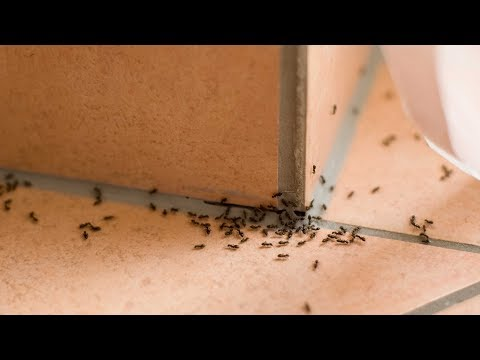 Get Rid of Ants Without an Exterminator   Consumer Reports