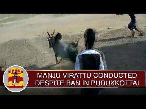 """""""Manju Virattu"""" conducted despite ban in Pudukkottai   Thanthi TV"""