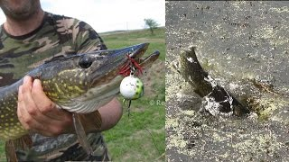 Pike Fishing: Topwater Smash on Belly Воблер жаба/ рибалка на щуку трави на Topwater приманки укуси Живих