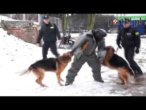 Psy słuzbowe w akcji (portel.pl)