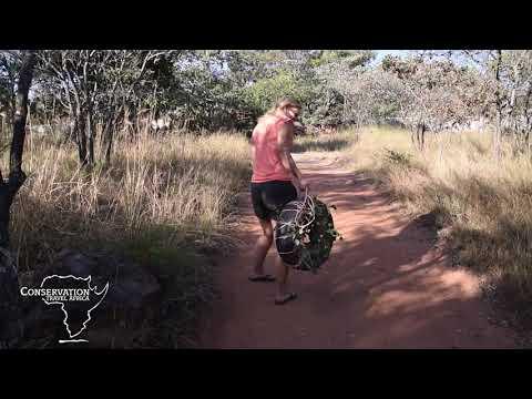 Linda's experience as a primate volunteer in Zimbabwe