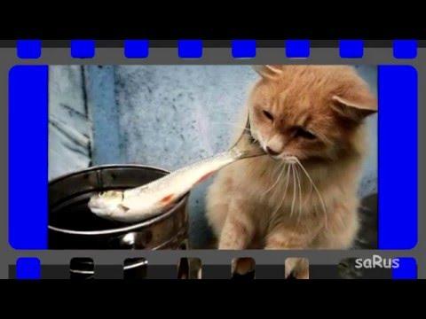 Кот суровый фото