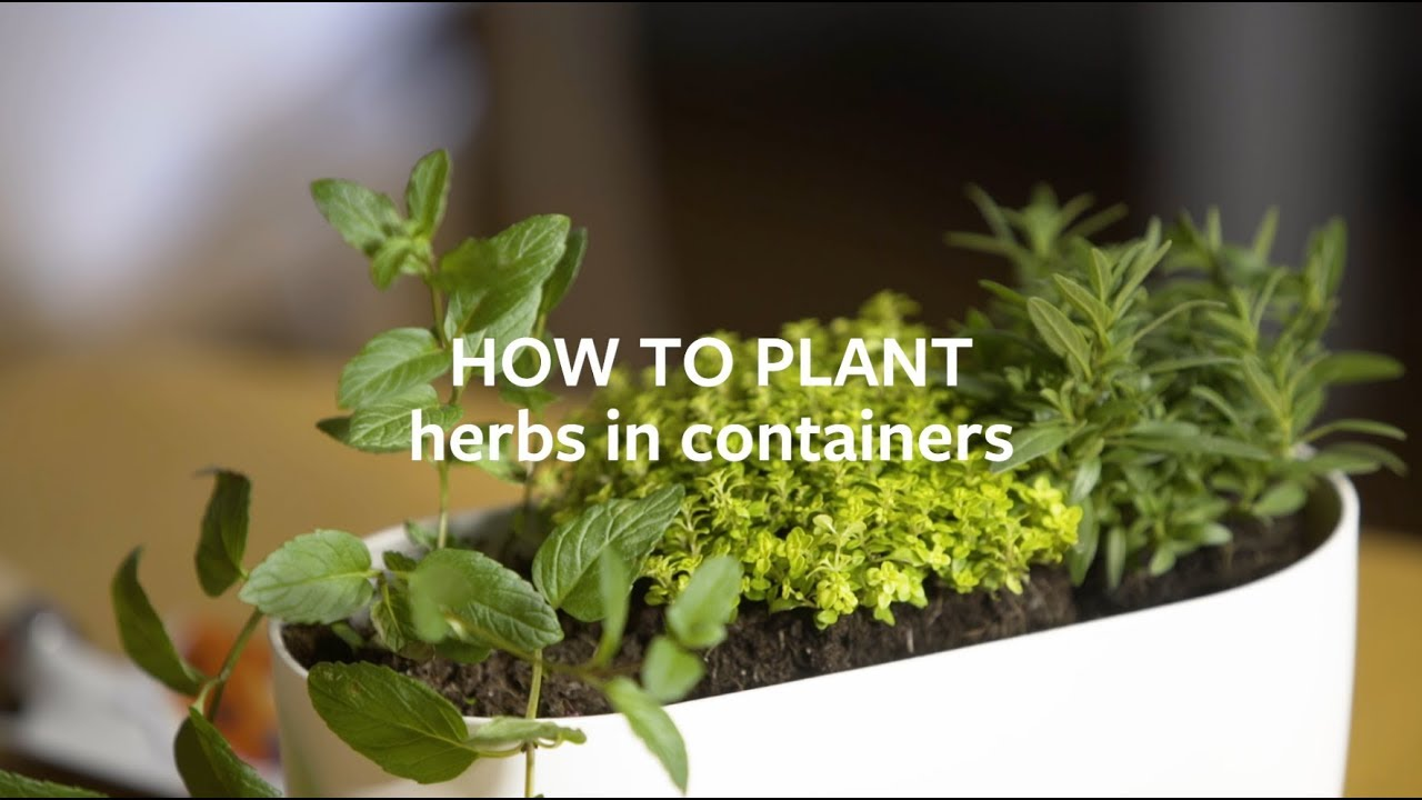 Herbs in containers / RHS Gardening