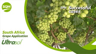 SPN Successful cases, Grapes – South Africa
