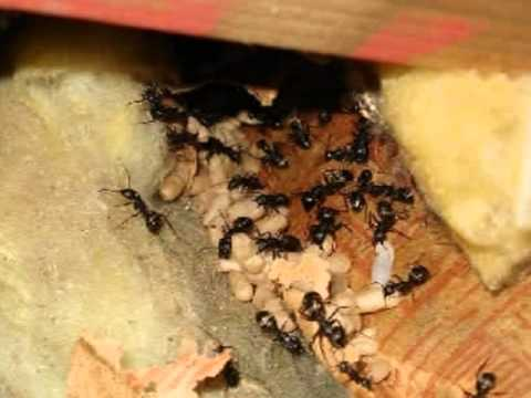 lake whatcom home inspector king of the house carpenter ants youtube