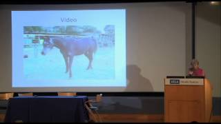 Bullying And Self-injury In Humans And Non-human Animals -- 2012 Zoobiquity Conference