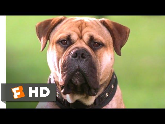 See Spot Run (2001) - The FBI's Top Dog Scene (3/8) | Movieclips
