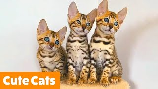 Cutest Silly Cats | Funny Pet Videos