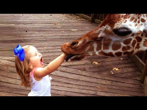 Funnest Baby Playing With Animals - Funny Baby Actions
