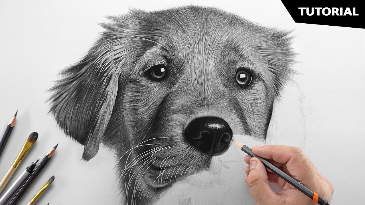 How to Draw a Realistic Dog   Tutorial for BEGINNERS
