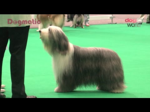 Midland Counties Dog Show 2015 - Pastoral group FULL