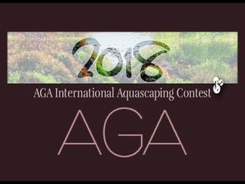 Aga International Aquascaping Contest 2018 Youtube