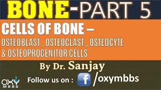 BONE - PART 5 | CELLS OF BONE - OSTEOPROGENITOR CELLS, OSTEOBLAST, OSTEOCLAST, & OSTEOCYTES
