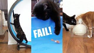 Cats vs Fish, Ice Ball & Treadmill - Cole and Marmalade