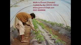 Movie 0321 8669044 Tunnel Vegetable Farming in Pakistan Green house Training and feasibility