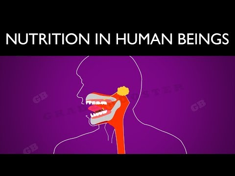 Nutrition in Human beings : Life Processes :10th Biology : CBSE Syllabus : NCERT X Science