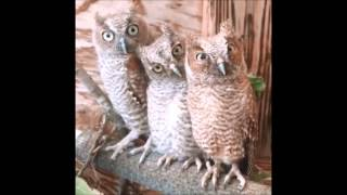 HEY!!! HEEEY!!! Angry Owl remix :P no attention