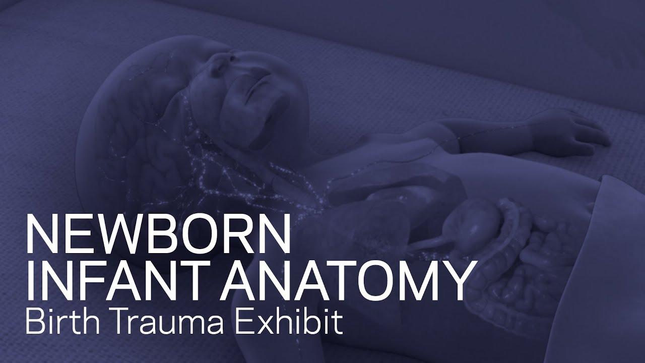 Newborn Infant Anatomy - Birth Trauma Exhibit - YouTube