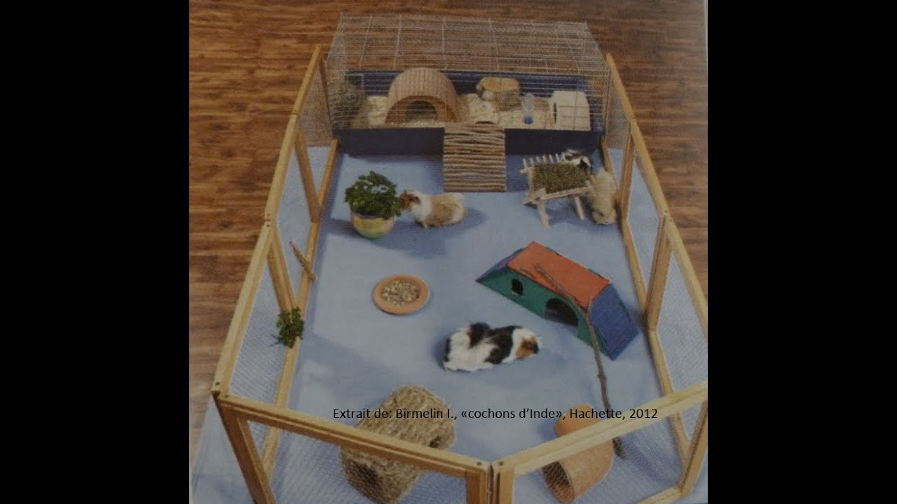 La maison du rongeur habitat emplacement accessoires for Accessoires decoratifs maison