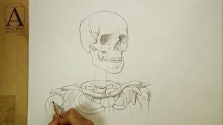 Head, Neck and Shoulders Skeletal Anatomy - Anatomy Master Class