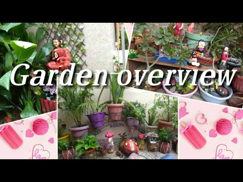 #Garden tour # My front garden overview in rainy season #Meet my plants with there name# thumbnail