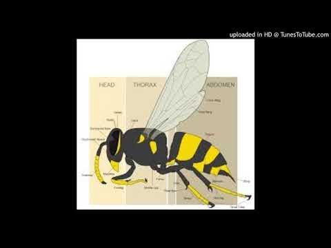 The Wasp (Texas Radio)