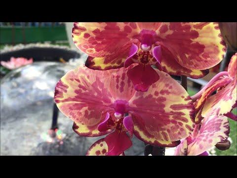 Самые редкие орхидеи из завоза в Бауцентр 27 марта 2020 г. Съёмка у фонтана)))
