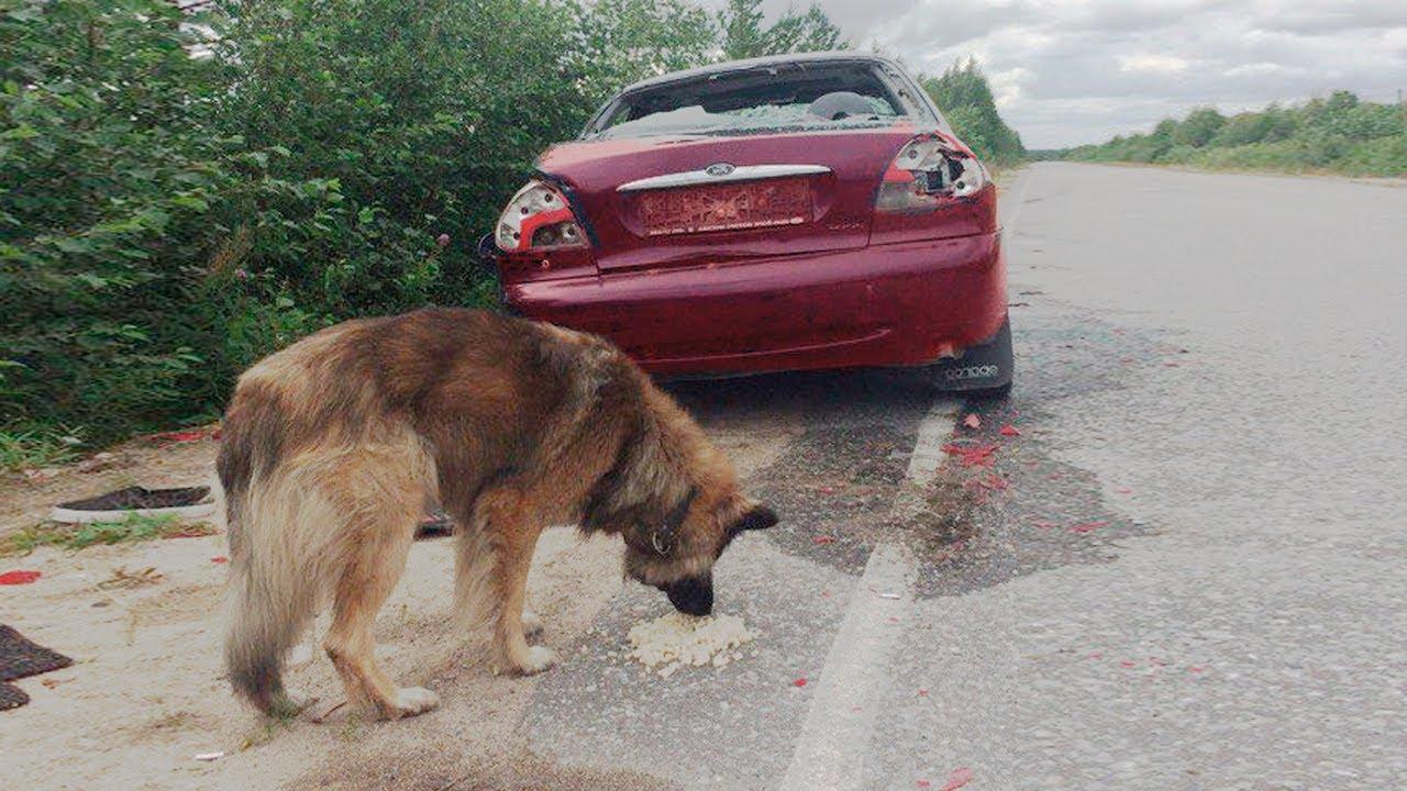 Эта собака не видела своих хозяев 7 лет... Посмотрите, что произошло