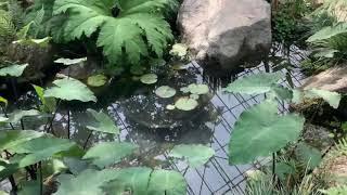 평강식물원[동영상] 2020년 5월 18일