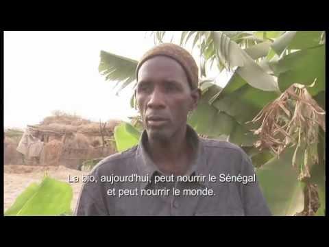 sénégal---agriculture-biologique