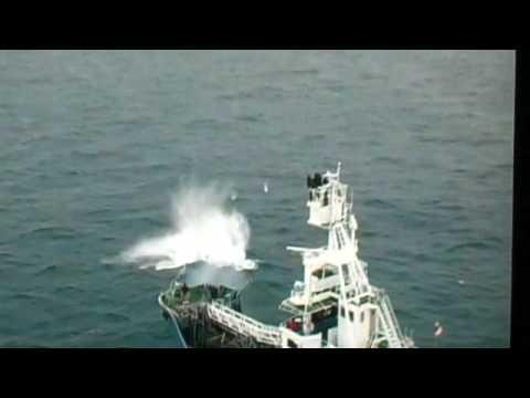 Japanese Whalers killing Endangered minke whale