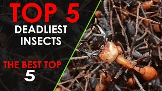 [TOP 5] Most Deadliest Insects