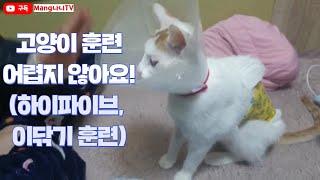 고양이훈련  3종셋트(…