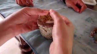 몰디브 샹그릴라 코랄 플랜팅  Coral plantin…