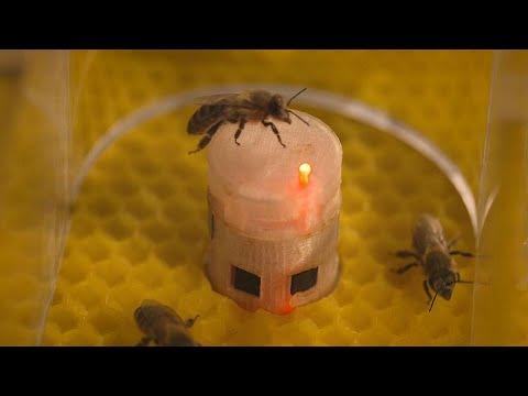 شراكة بين الروبوتات والنحل بهدف تحسين حماية البيئة وفهم أفضل للمجتمعات الحيوانية…