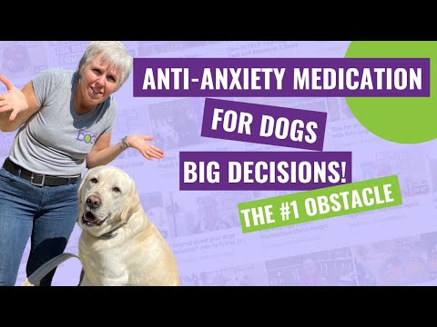 Anti-Anxiety Medication for Dogs – The #1 Obstacle to Saying YES!