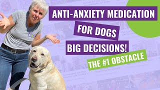 AntiAnxiety Medication for Dogs – The #1 Obstacle to Saying YES!