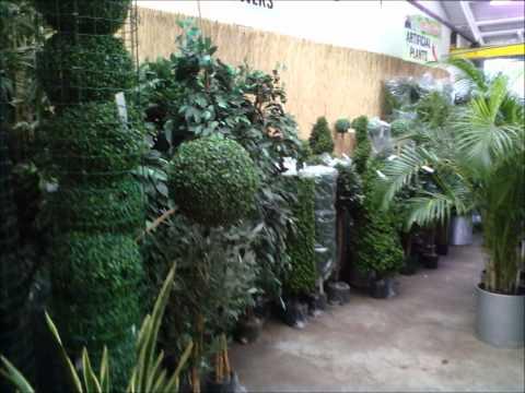 Plant life - Dublin