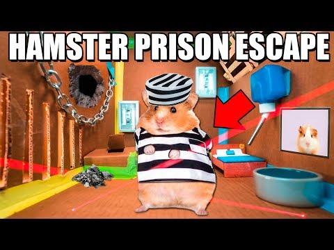 Hamster BOX FORT Prison ESCAPE ROOM!