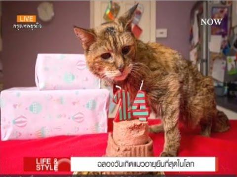 ฉลองวันเกิดแมวอายุยืนที่สุดในโลก